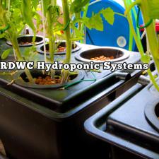 RDWC Hydroponic Systems