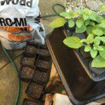 aeroponic transplanting
