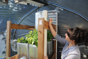 marking vertical aquaponics