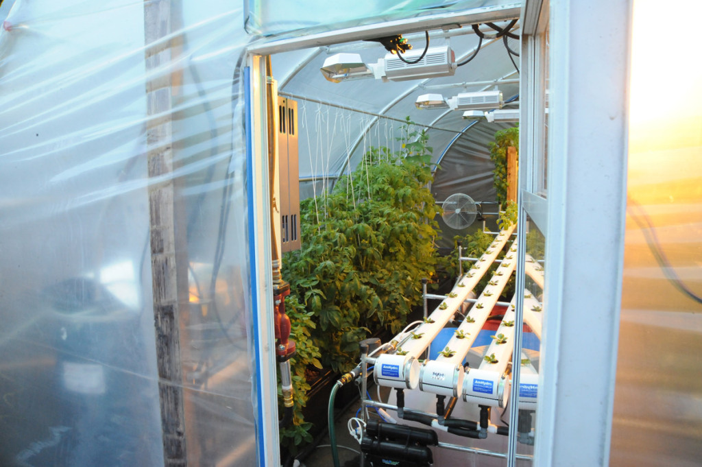 hydroponics greenhouse systems