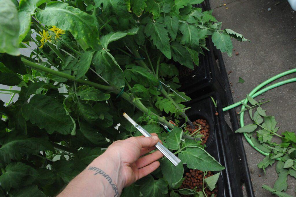 pruning rdwc plants