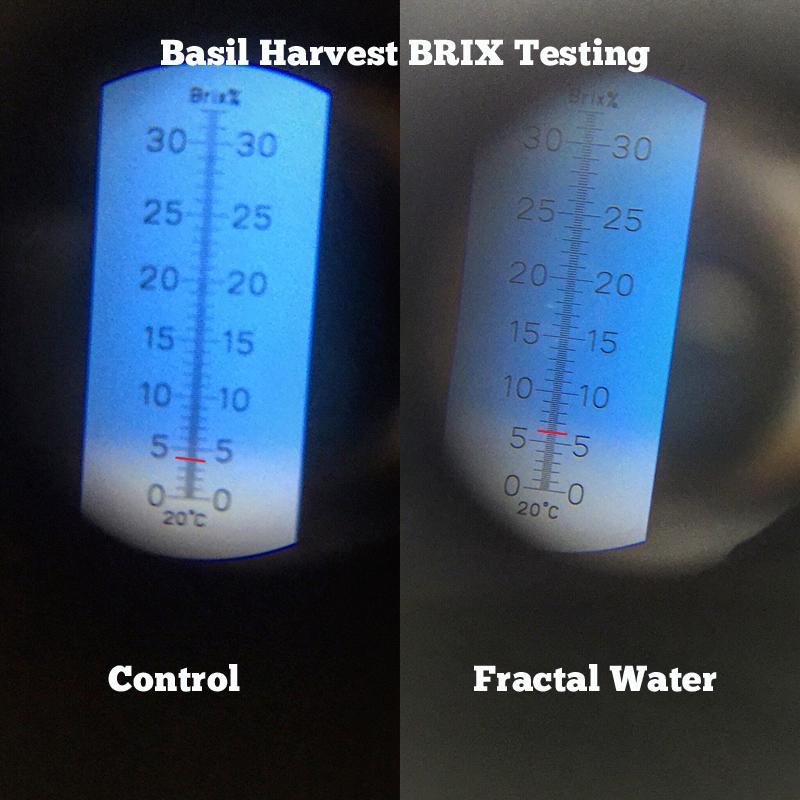 basil brix levels