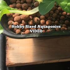 Hobby Sized Aquaponics