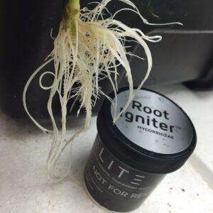 root igniter aerocloners