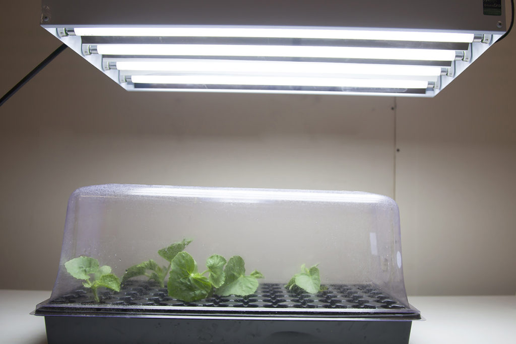 plant propagation light