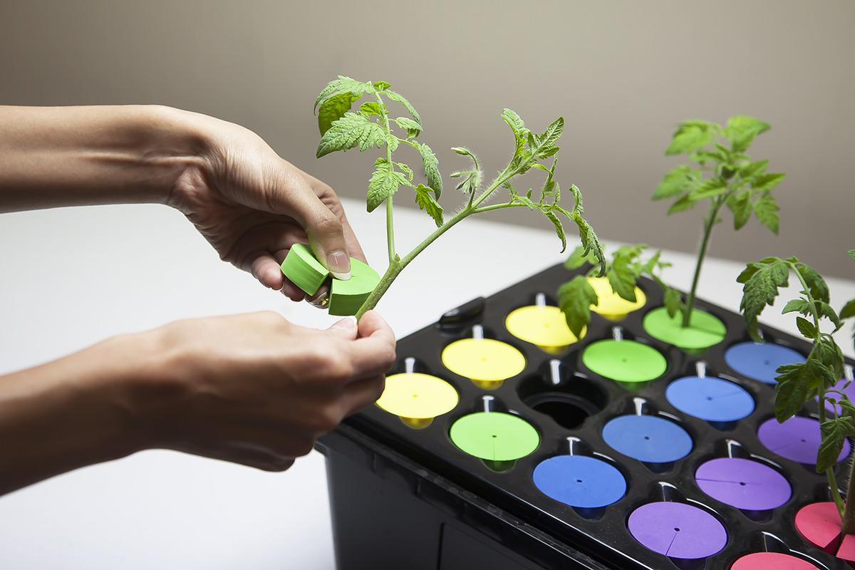 Beginner Plant Propagation Easy Guide Grozinegrozine