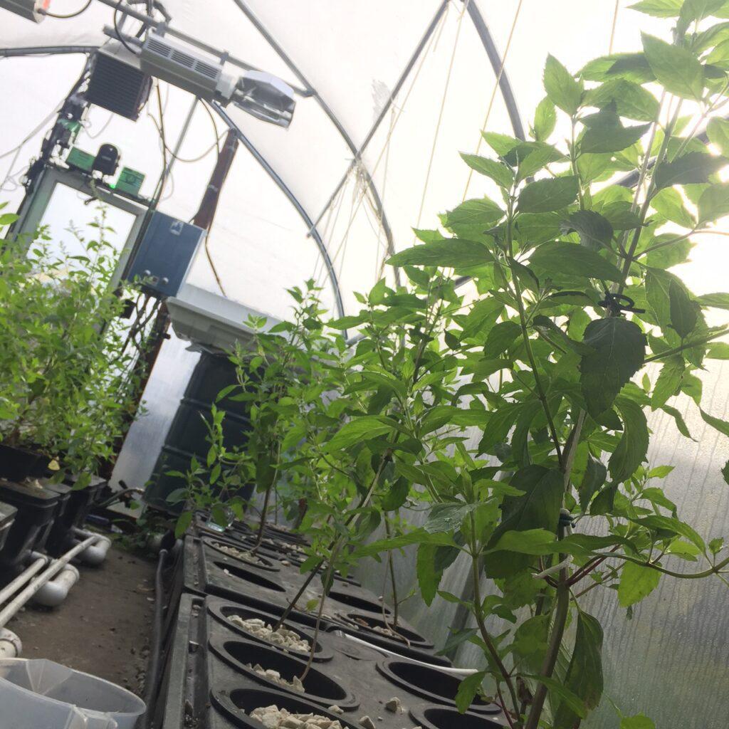Grozine Research Greenhouse