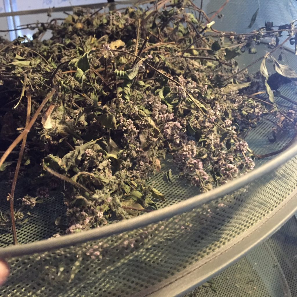 drying-hydroponic-herbs