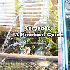 Terpenes, A Practical Guide for Understanding and Application