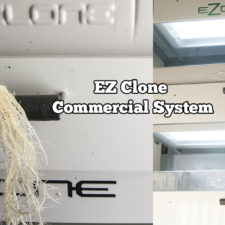 EZ Clone Commercial System REVIEW