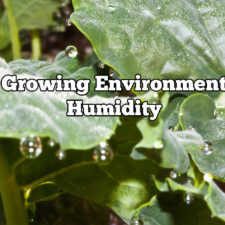 Growing Environment Humidity