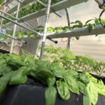 aeroponics cloning growing