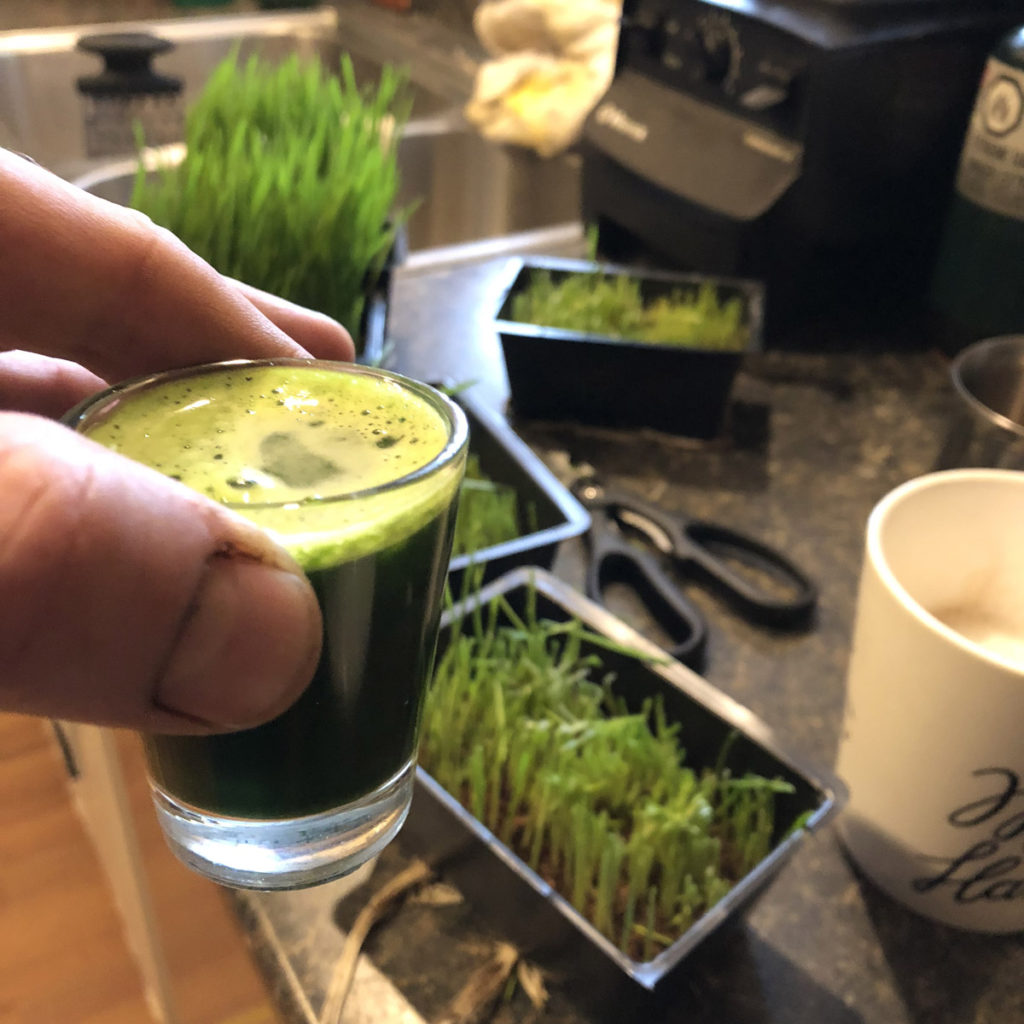 juicing wheatgrass