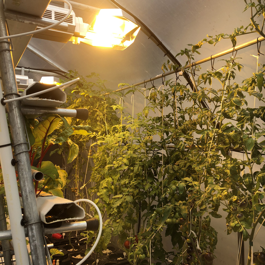 grow lights hydroponic tomatoes