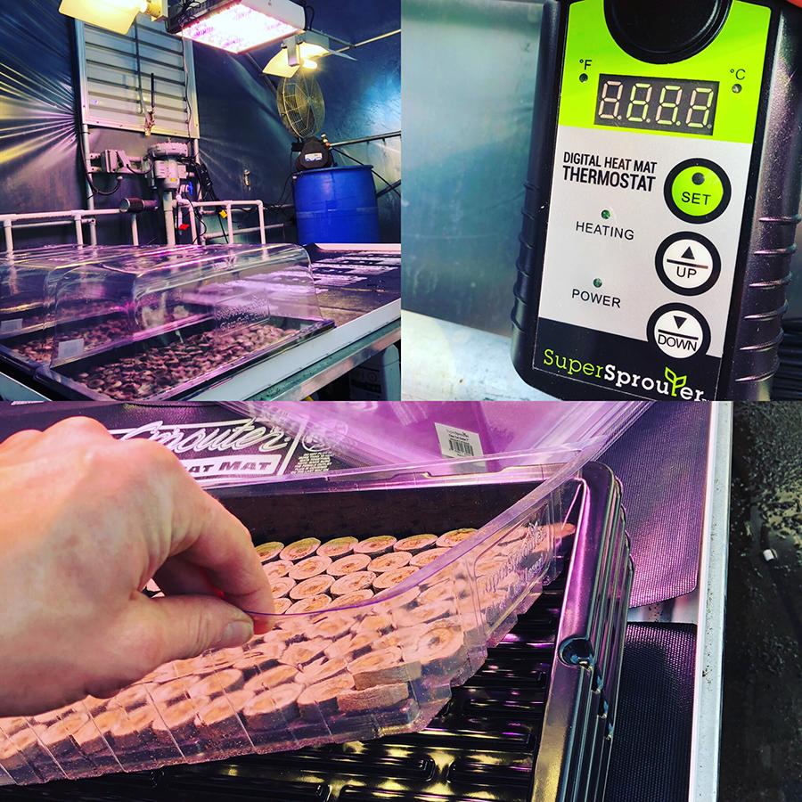 super sprouter seedling heat mats