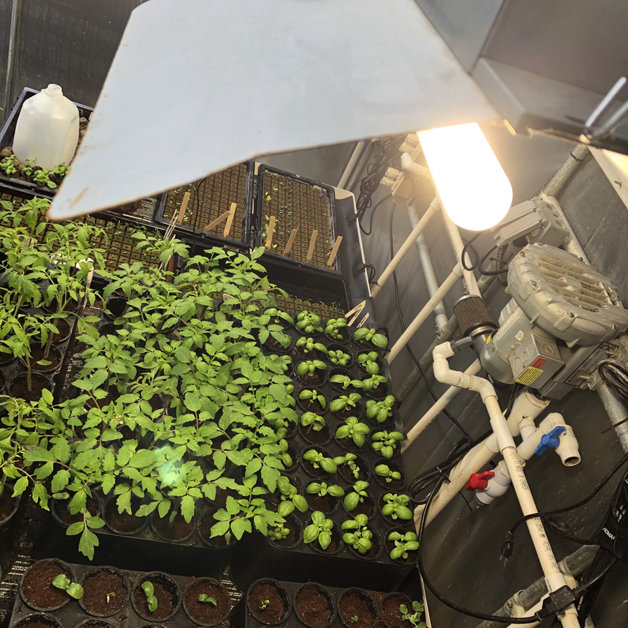 full spectrum lighting growing garden transplants